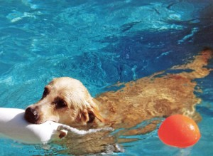 Dog playing in swimming pool